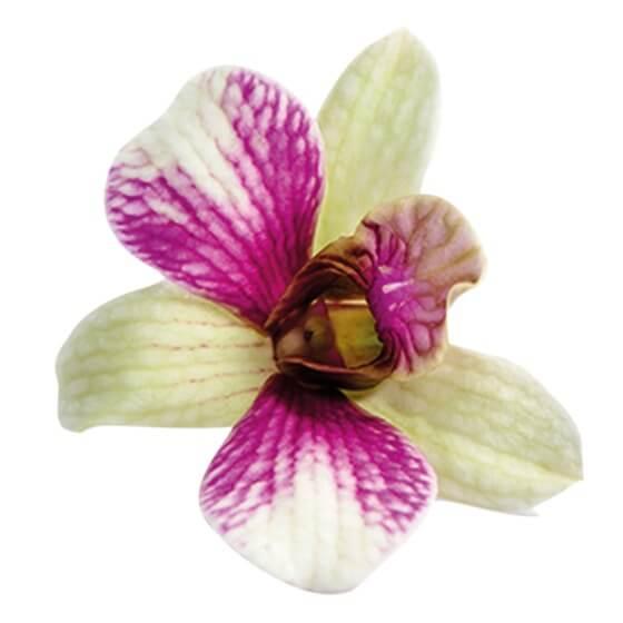 orchideenbl ten essbar fr 8st schale ca20g schale stroetmann24 b2b gro verbraucher. Black Bedroom Furniture Sets. Home Design Ideas